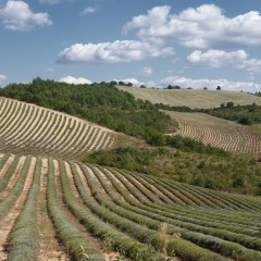 Espinouse, Haute-Provence  11 septembre 2014